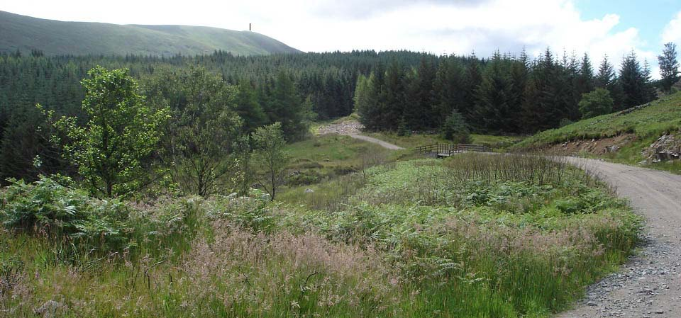 Forest road to Carlin's Cairn